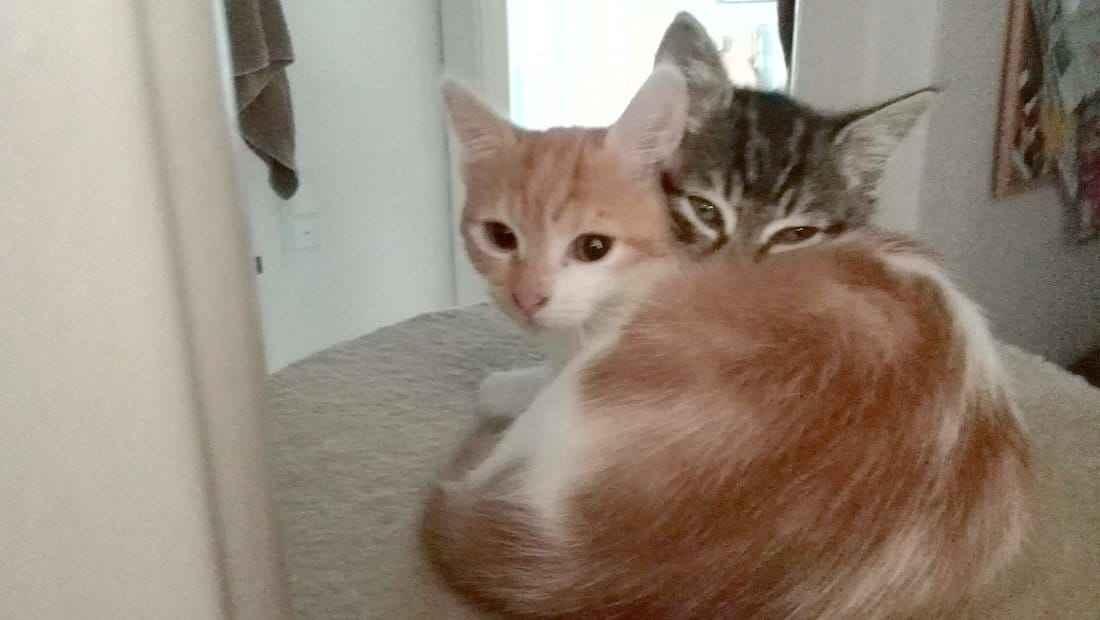 Schwanger Mit Katze