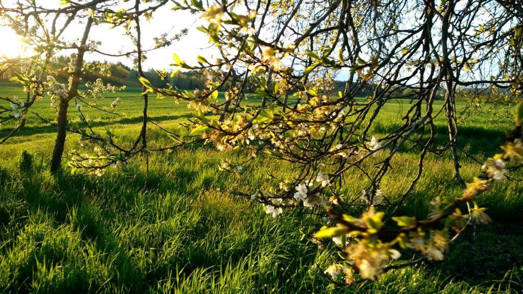 Es tut wirklich gut, in der freien Natur zu sein. Und hier ist das Gras irgendwie grüner als ich es in Erinnerung hatte.