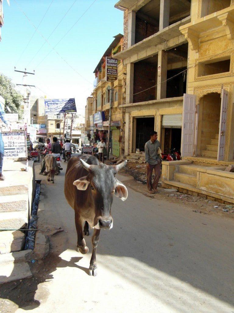 Straße Kuh Nordindien Reise