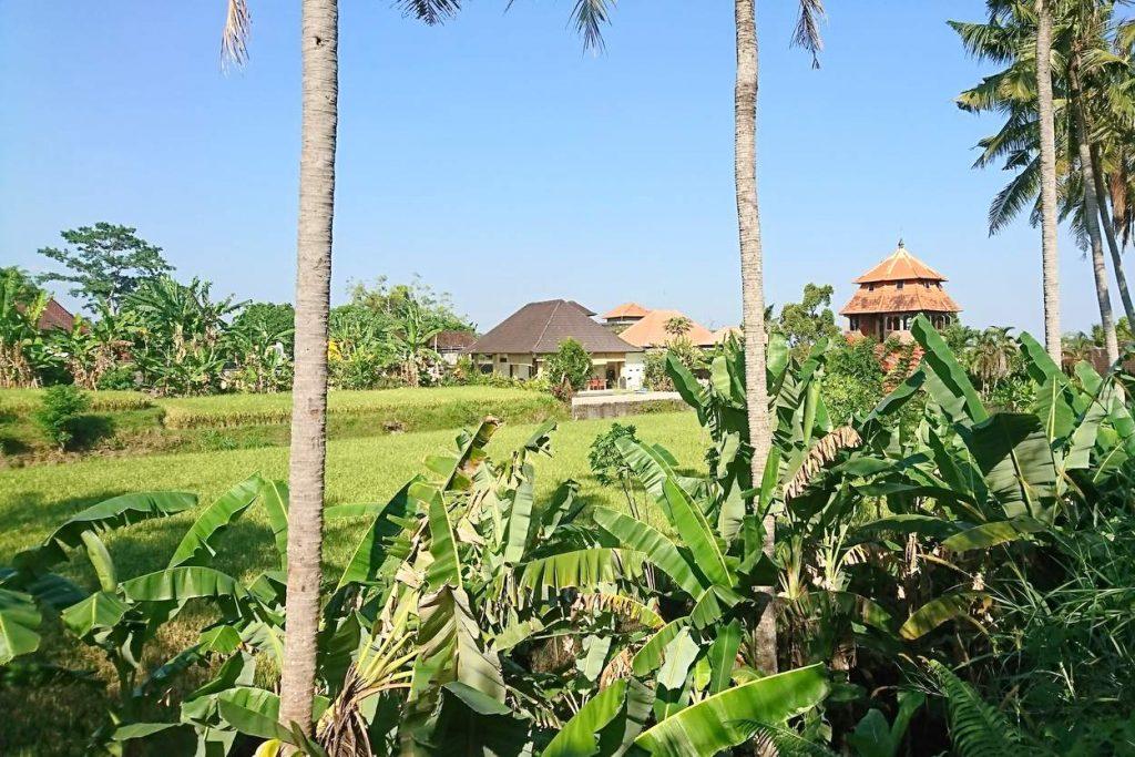 Wohnanlage mit Villas mitten zwischen Reisfelder in Ubud