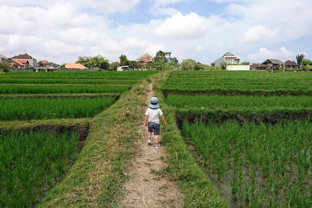 Kleinkind wandert auf reisfeld