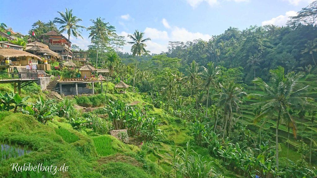 Reisfeld-Terrassen Bali